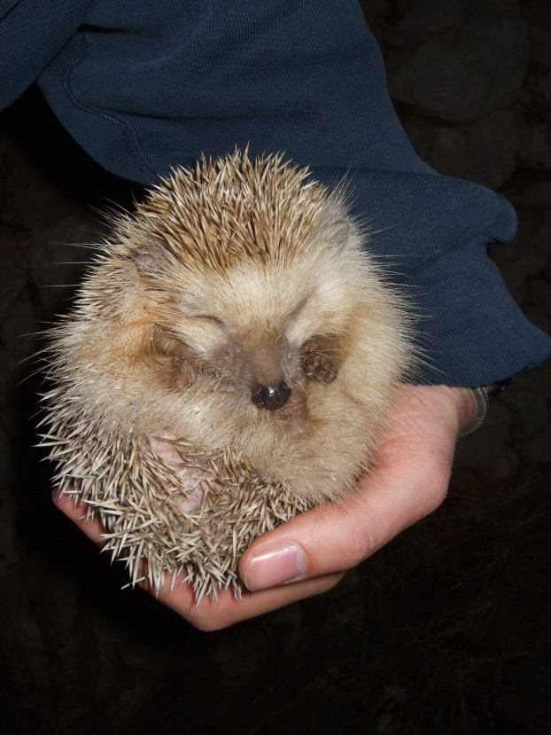 08.03.26_Hedgehog (5)